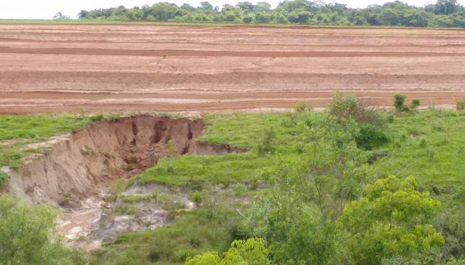 AGRONEGÓCIO GADO BÚFALOS 04