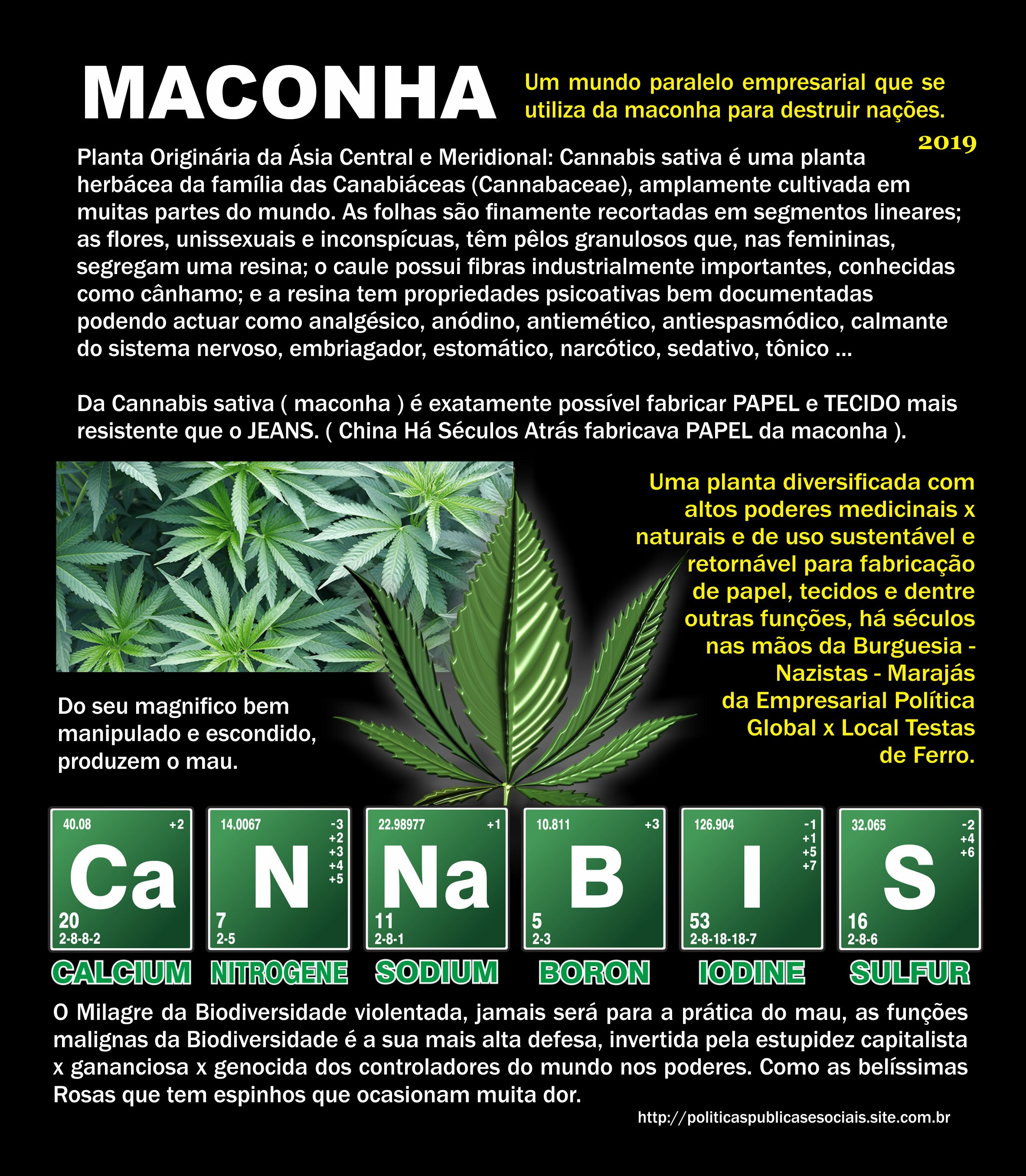 Maconha No Mundo Cannabis Américas do Sul e Central