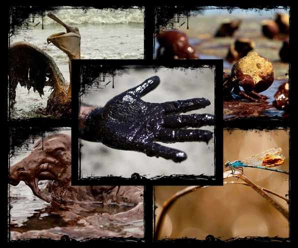 Petróleo Animais e as Conseqüências